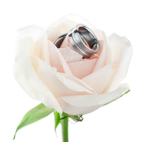 Titanium Wedding Bands On Rose